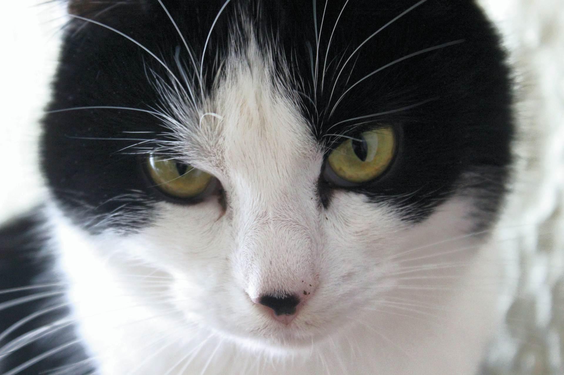 Katze_Sylvie_closeup01
