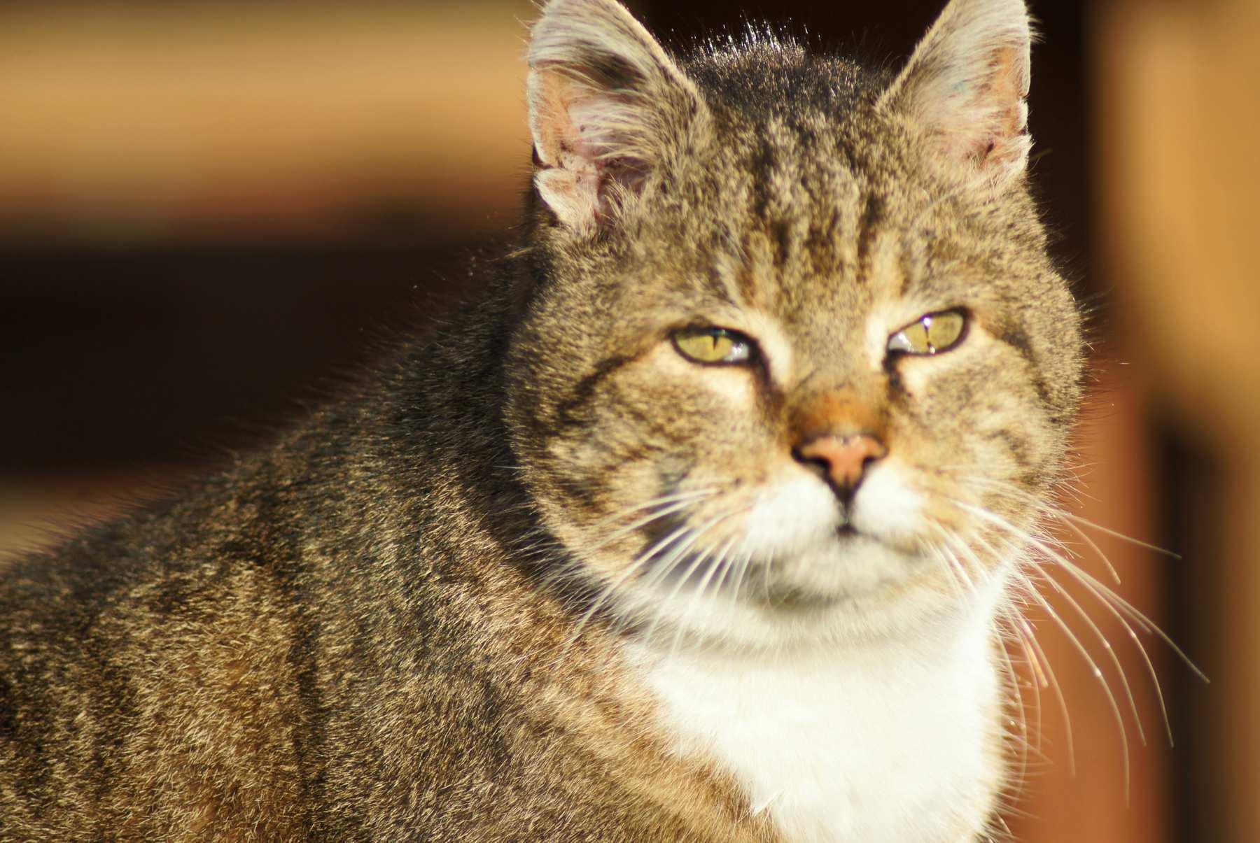 Tiger_Portrait01